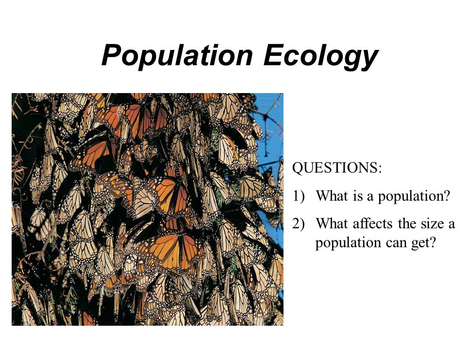 Population Ecology QUESTIONS: What is a population