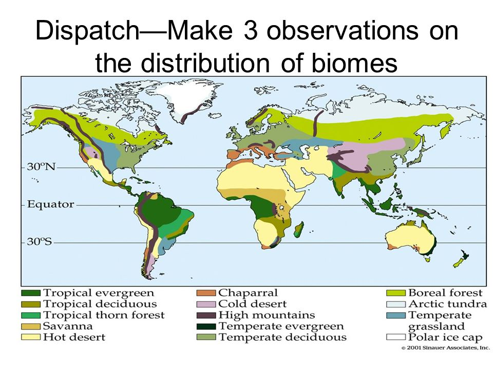 Dispatch—Make 3 observations on the distribution of biomes