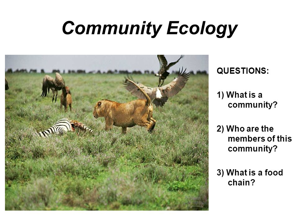 Community Ecology QUESTIONS: 1) What is a community