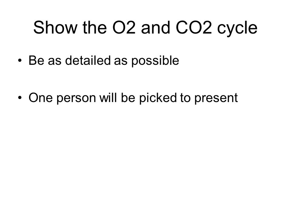 Show the O2 and CO2 cycle Be as detailed as possible