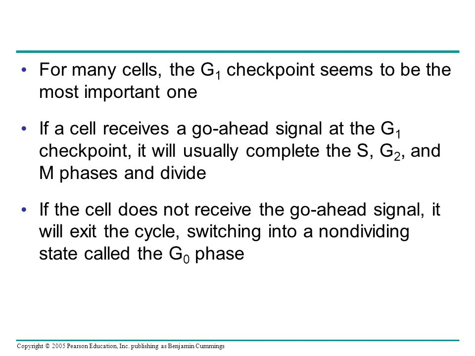 For many cells, the G1 checkpoint seems to be the most important one