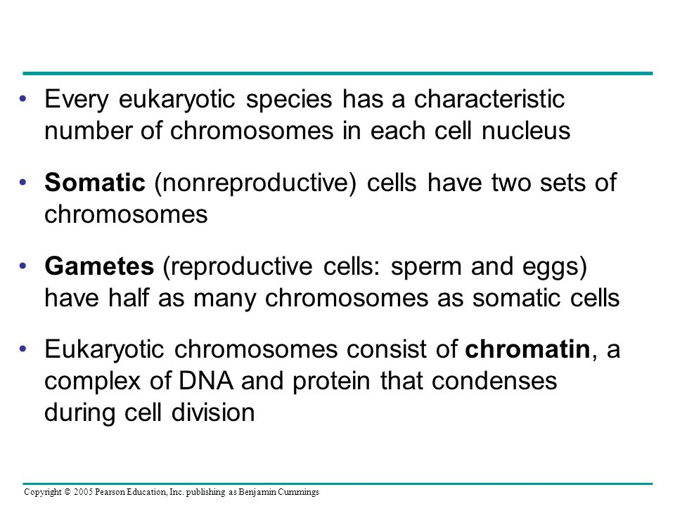 Every eukaryotic species has a characteristic number of chromosomes in each cell nucleus