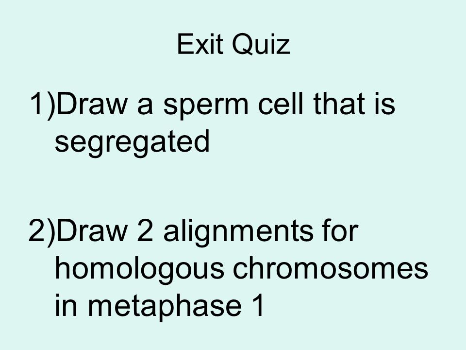 Draw a sperm cell that is segregated