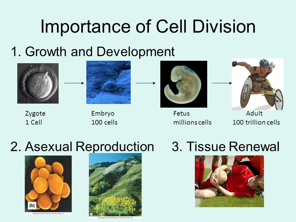 Importance of Cell Division