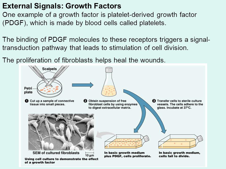 External Signals: Growth Factors