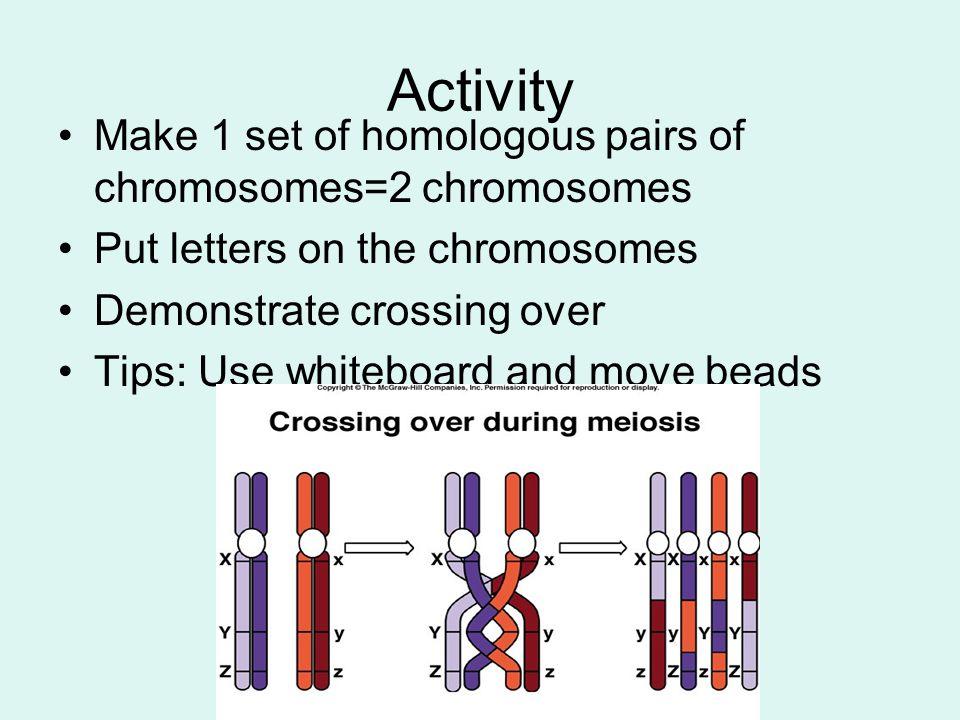 Activity Make 1 set of homologous pairs of chromosomes=2 chromosomes