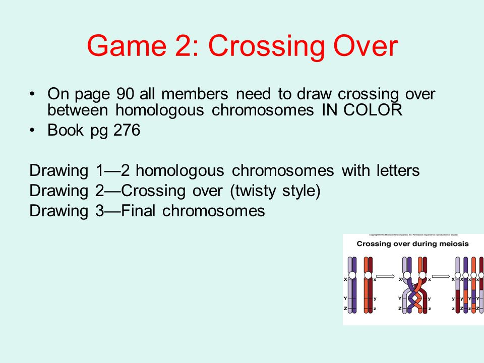 Game 2: Crossing Over On page 90 all members need to draw crossing over between homologous chromosomes IN COLOR.