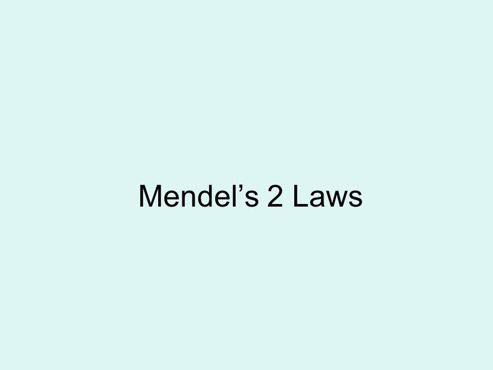 Mendel's 2 Laws