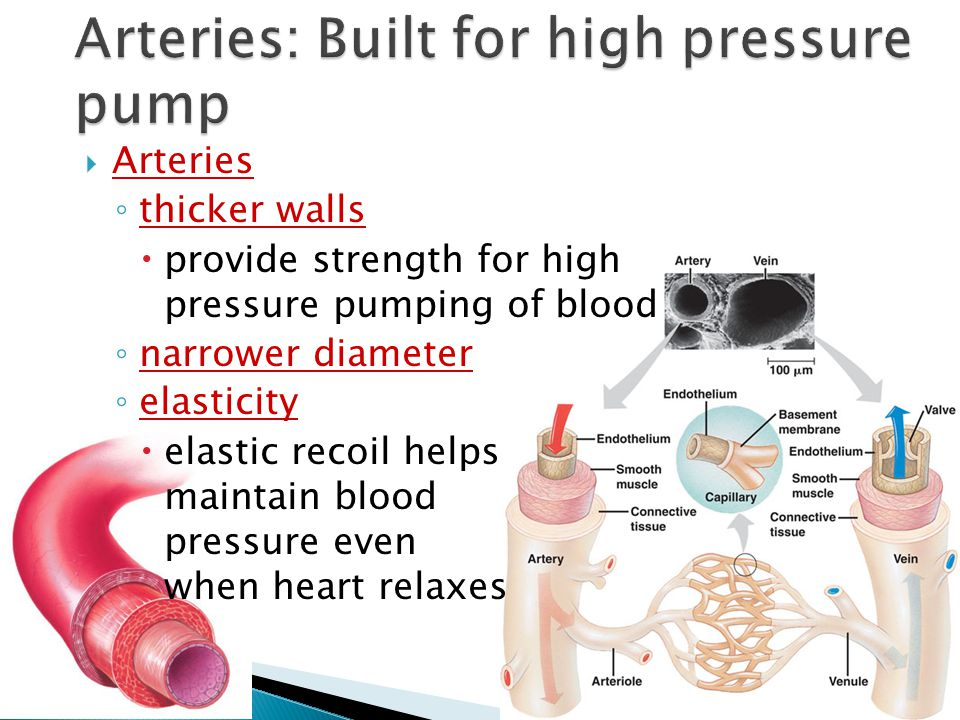 Arteries: Built for high pressure pump