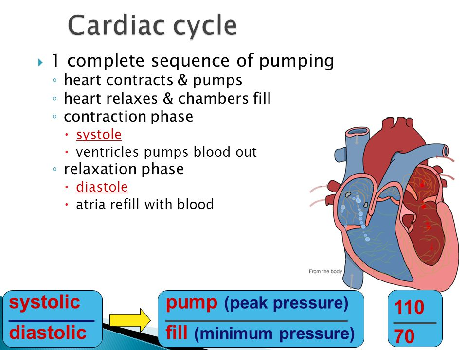 Cardiac cycle systolic ________ diastolic pump (peak pressure)