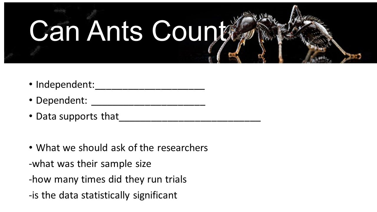 Can Ants Count Independent:____________________