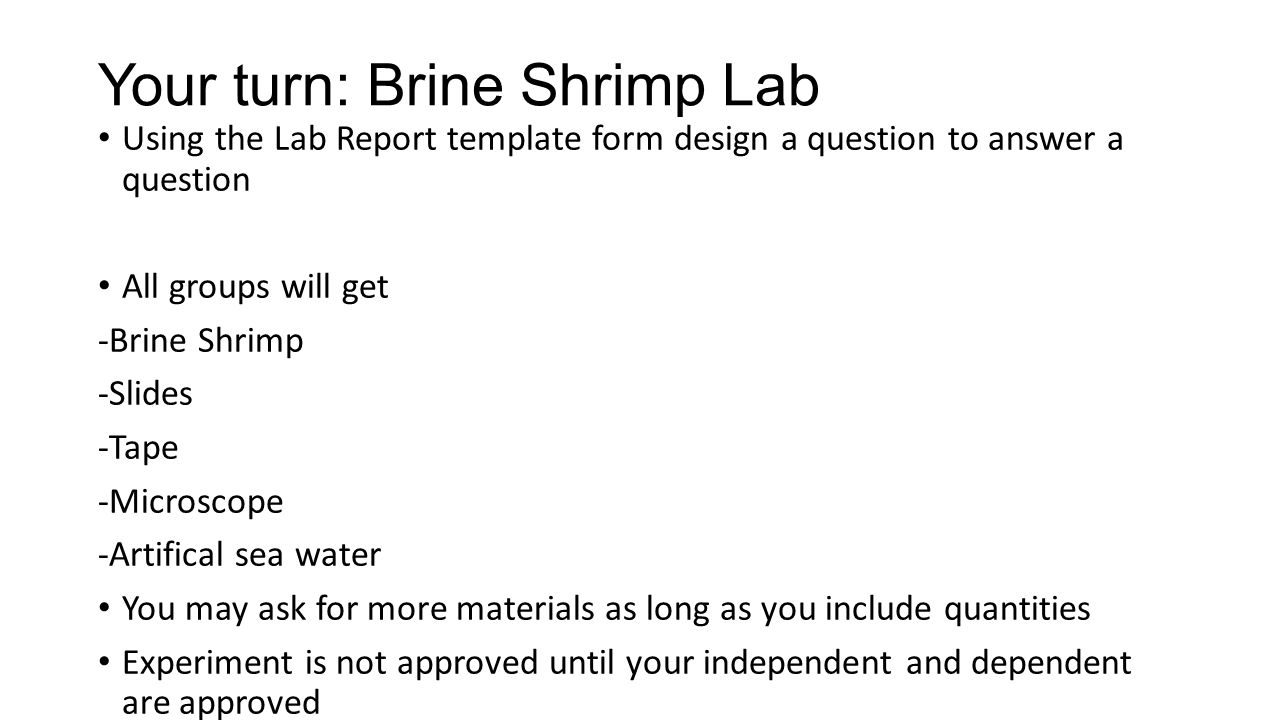 Your turn: Brine Shrimp Lab