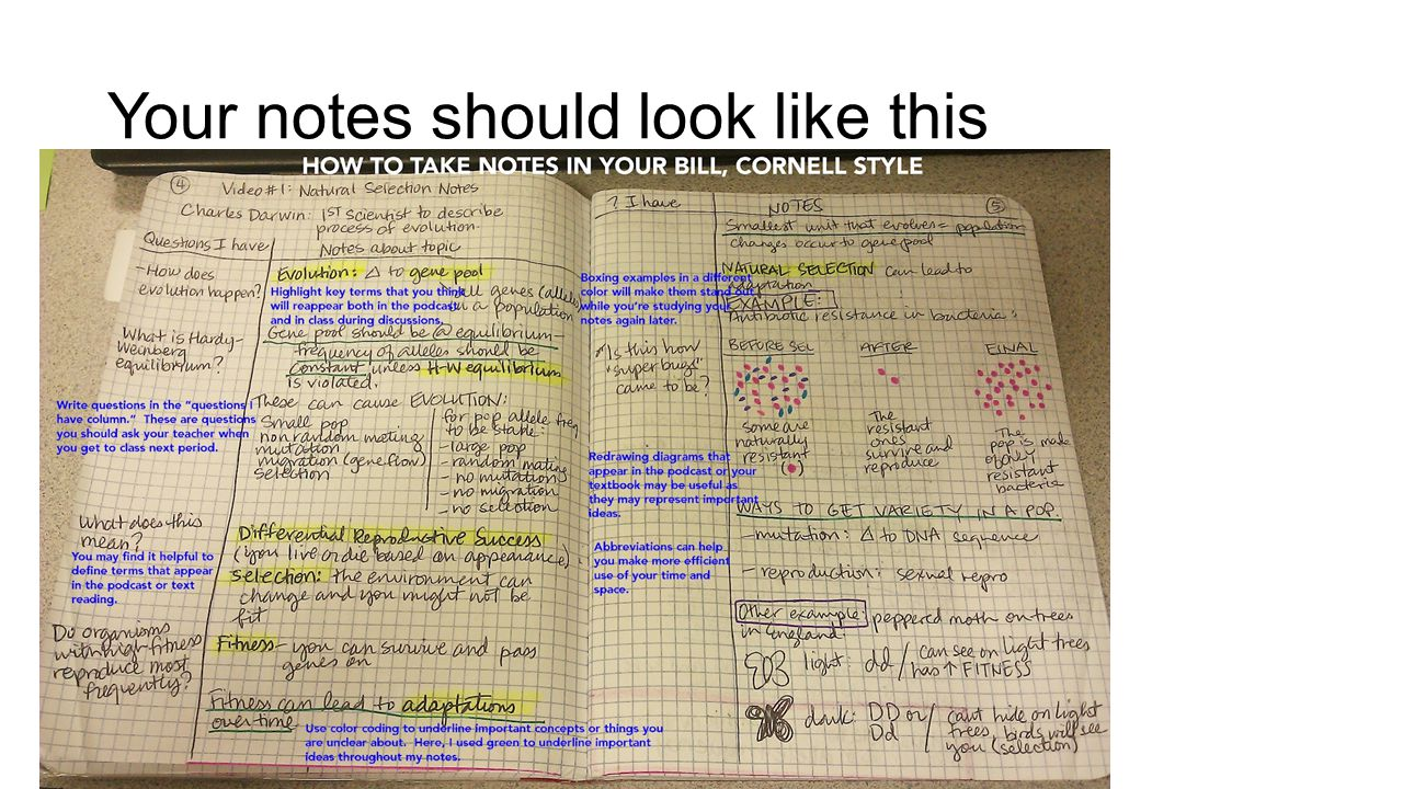 Your notes should look like this