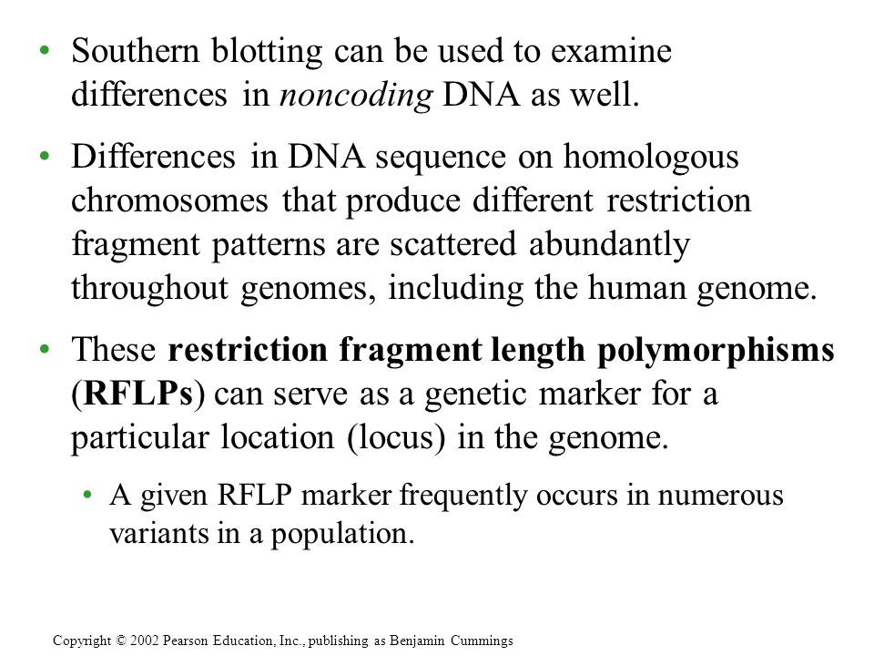 Southern blotting can be used to examine differences in noncoding DNA as well.