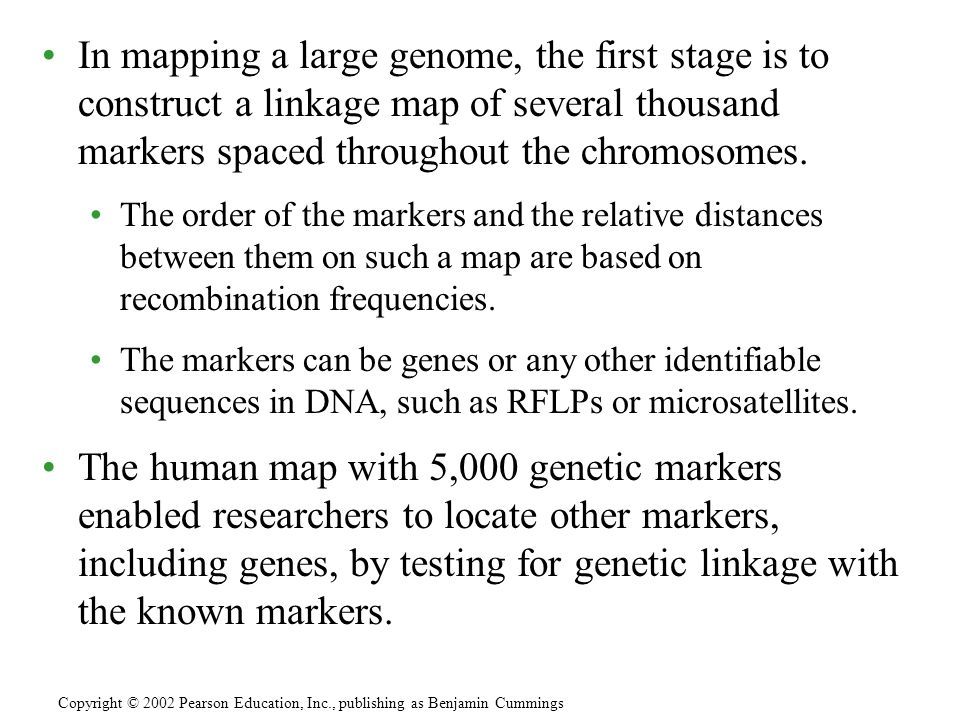 In mapping a large genome, the first stage is to construct a linkage map of several thousand markers spaced throughout the chromosomes.