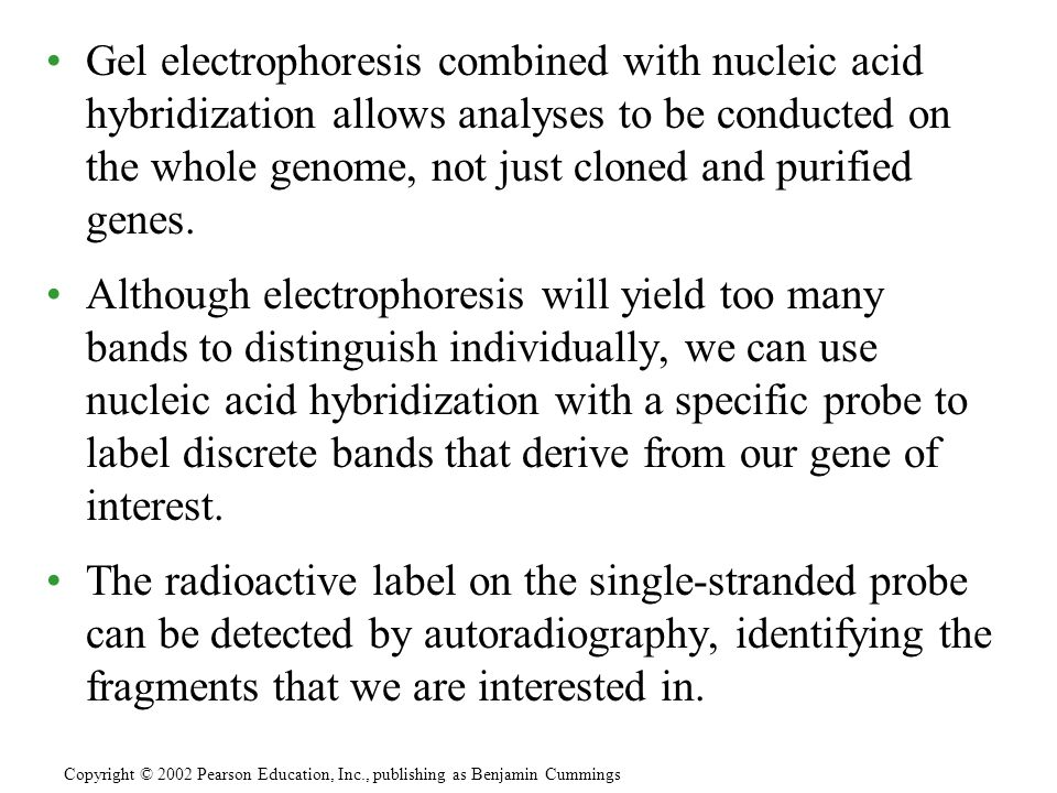 Gel electrophoresis combined with nucleic acid hybridization allows analyses to be conducted on the whole genome, not just cloned and purified genes.