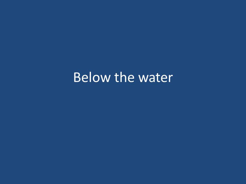 Below the water