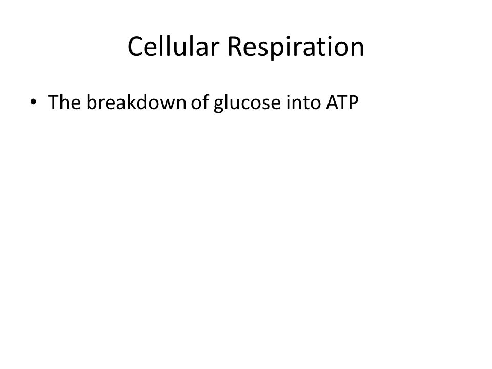 Cellular Respiration The breakdown of glucose into ATP