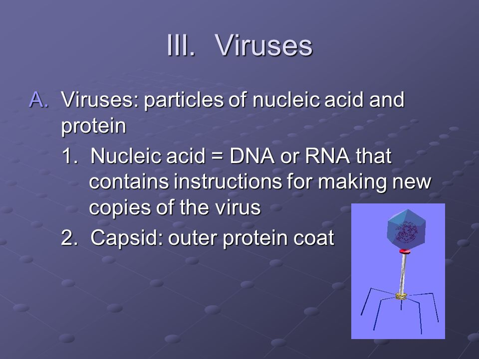 III. Viruses Viruses: particles of nucleic acid and protein
