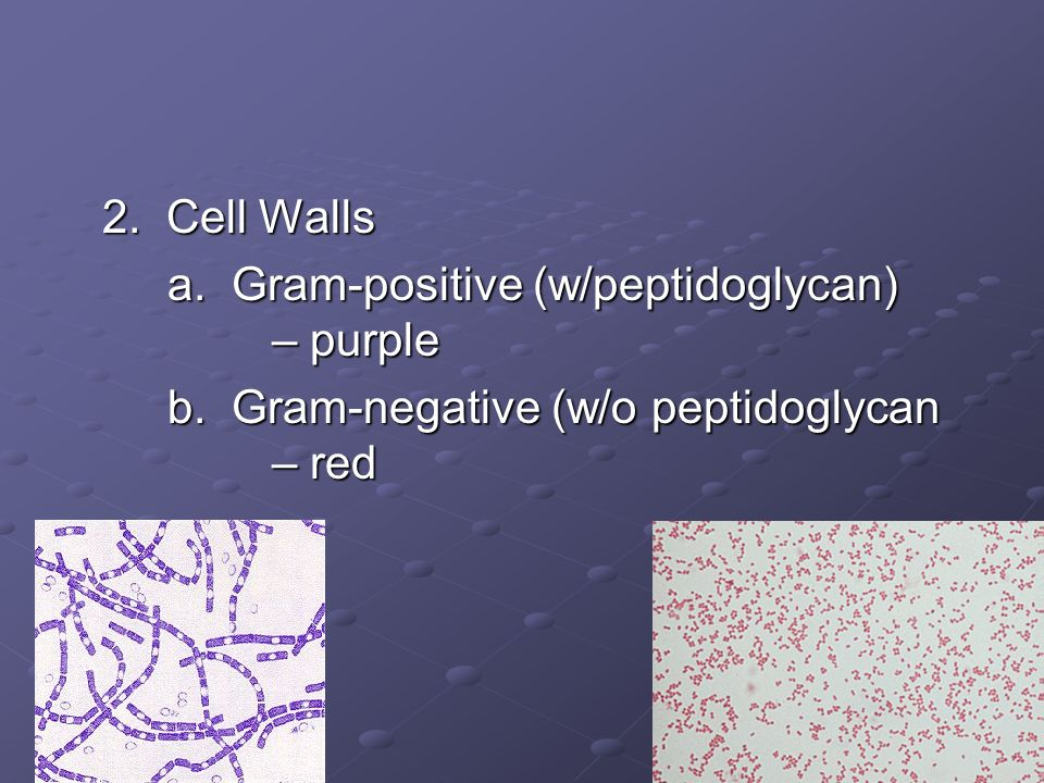 2. Cell Walls a. Gram-positive (w/peptidoglycan) – purple.