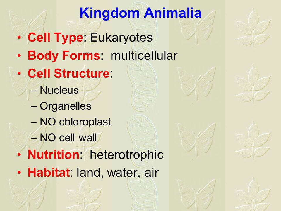 Kingdom Animalia Cell Type: Eukaryotes Body Forms: multicellular