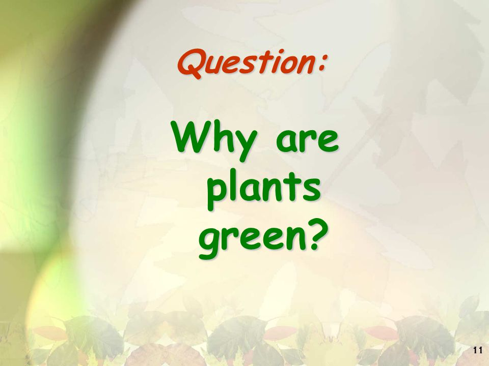 Question: Why are plants green