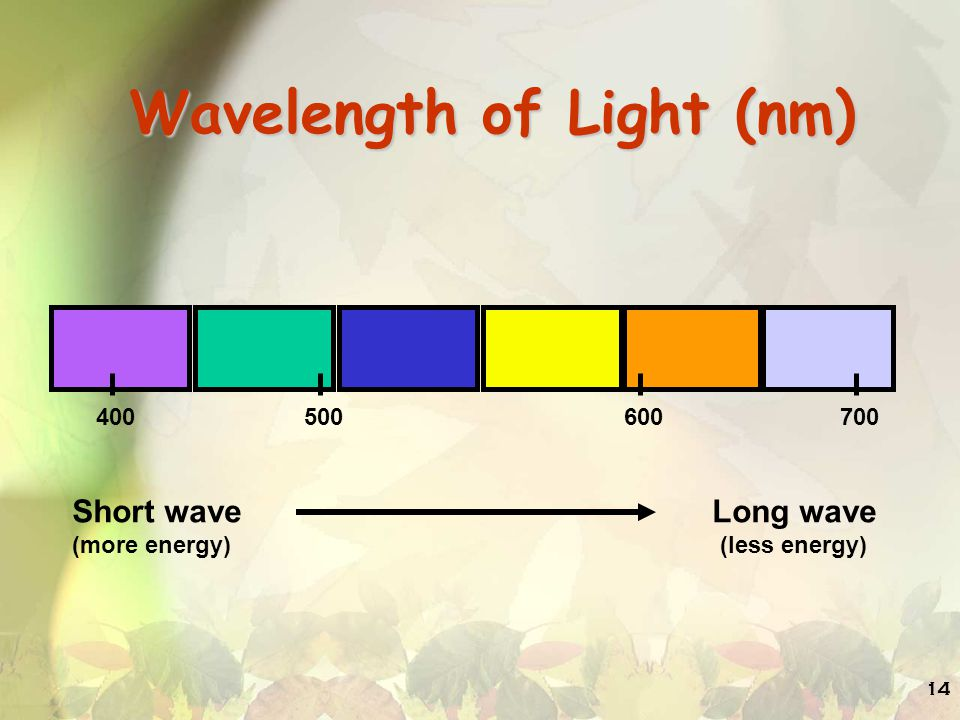 Wavelength of Light (nm)