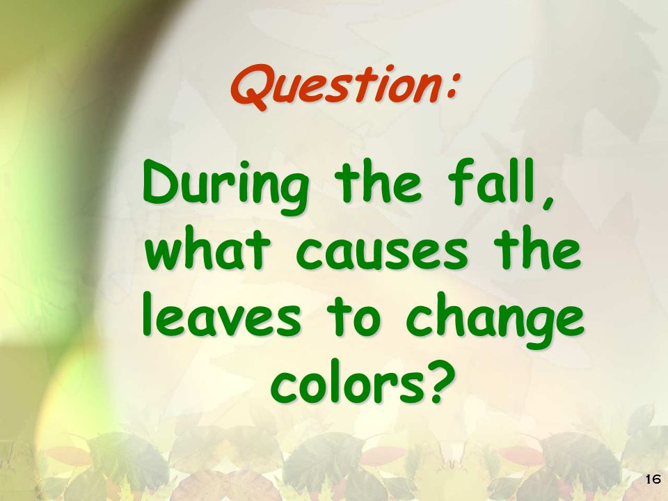 During the fall, what causes the leaves to change colors