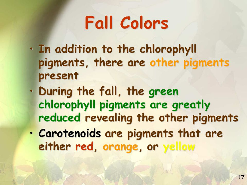 Fall Colors In addition to the chlorophyll pigments, there are other pigments present.