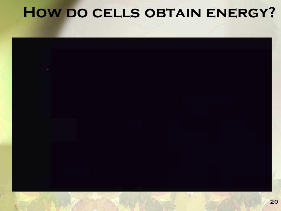 How do cells obtain energy