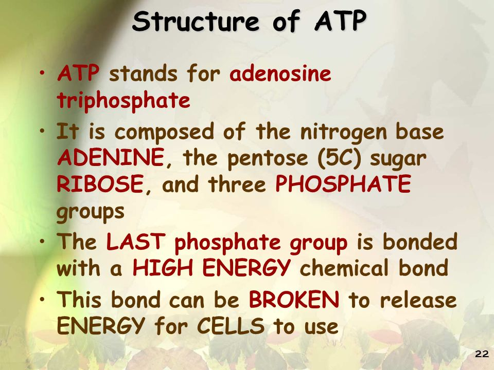 Structure of ATP ATP stands for adenosine triphosphate