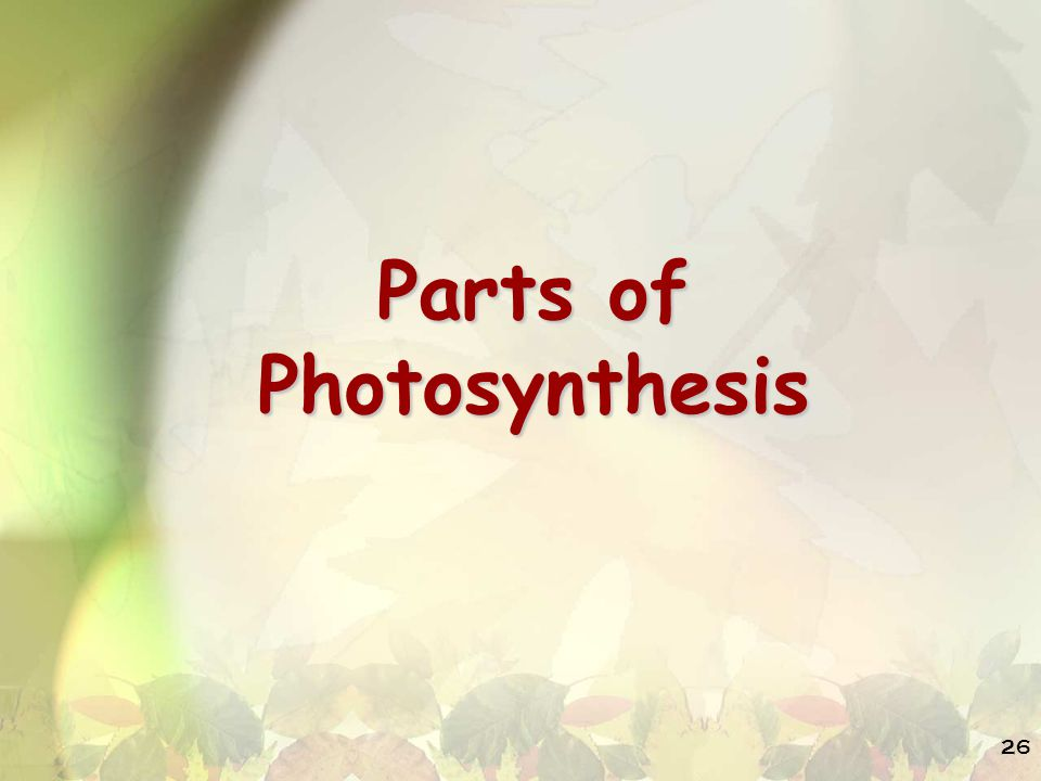 Parts of Photosynthesis