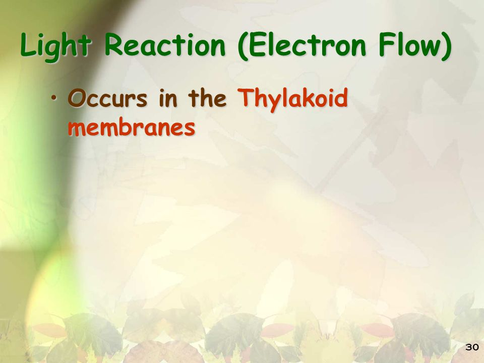 Light Reaction (Electron Flow)