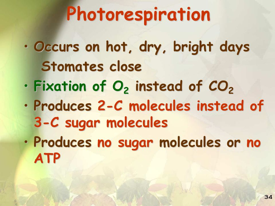 Photorespiration Occurs on hot, dry, bright days Stomates close