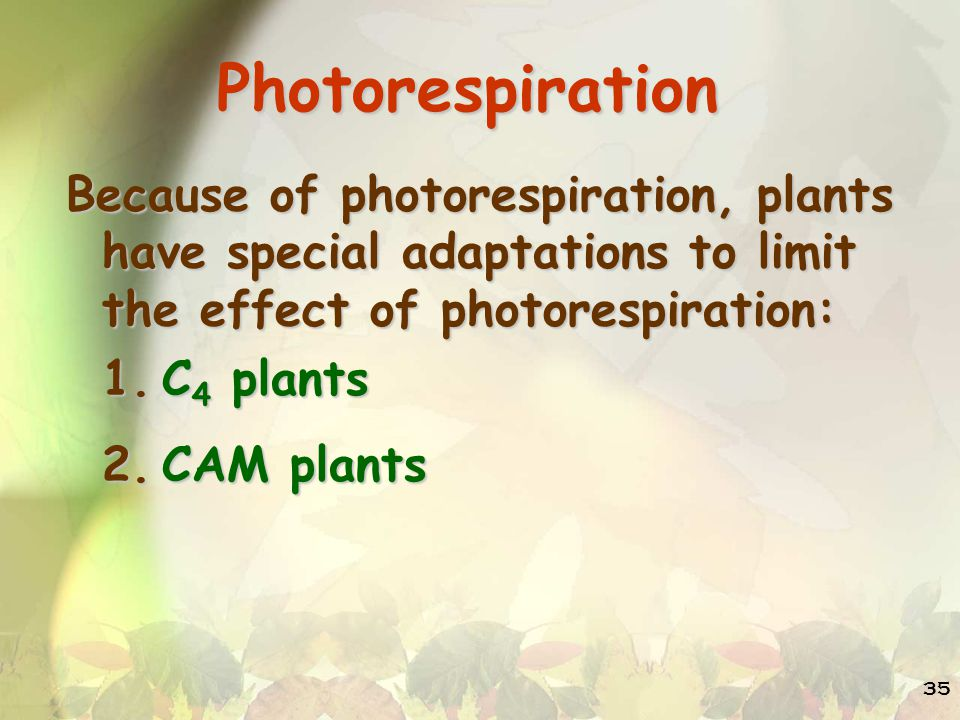 Photorespiration Because of photorespiration, plants have special adaptations to limit the effect of photorespiration: