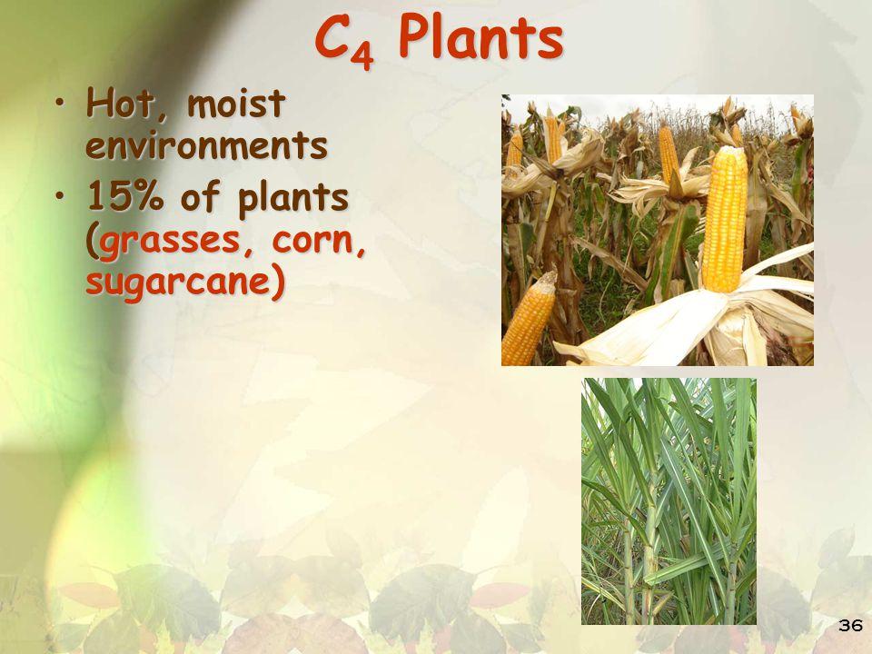 C4 Plants Hot, moist environments