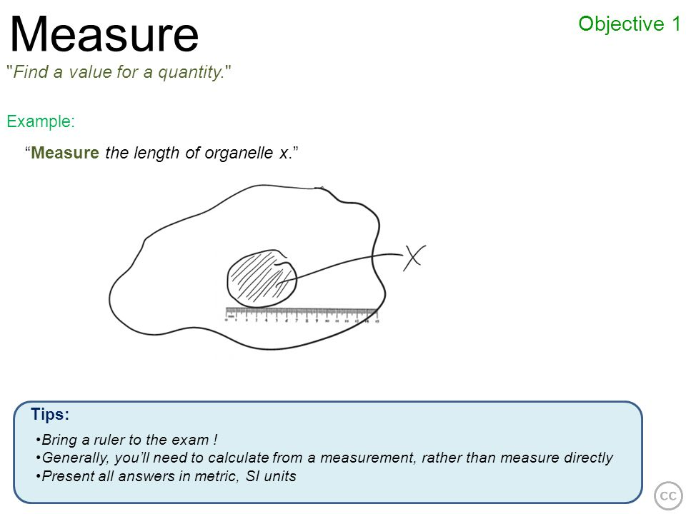 Measure Objective 1 Find a value for a quantity.