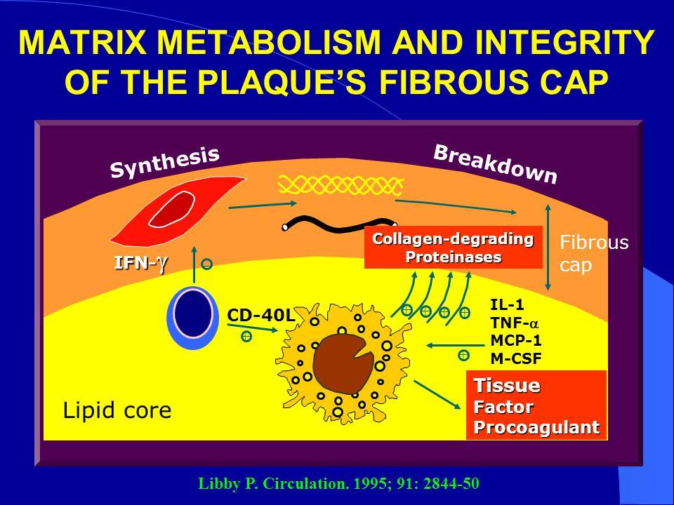 MATRIX METABOLISM AND INTEGRITY OF THE PLAQUE'S FIBROUS CAP