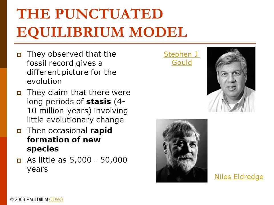 THE PUNCTUATED EQUILIBRIUM MODEL