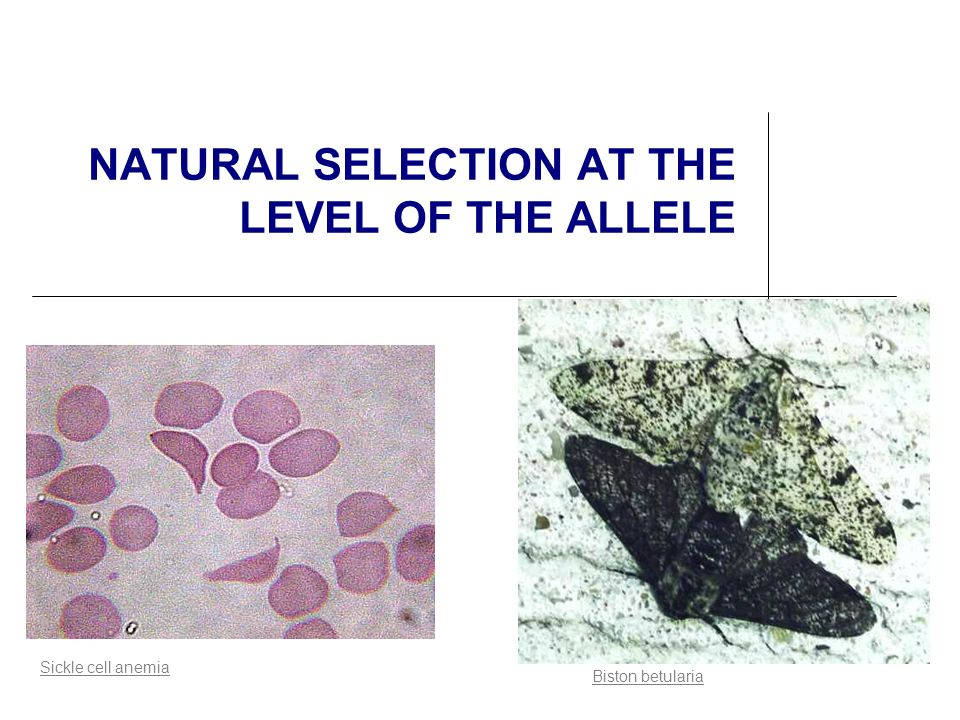 NATURAL SELECTION AT THE LEVEL OF THE ALLELE