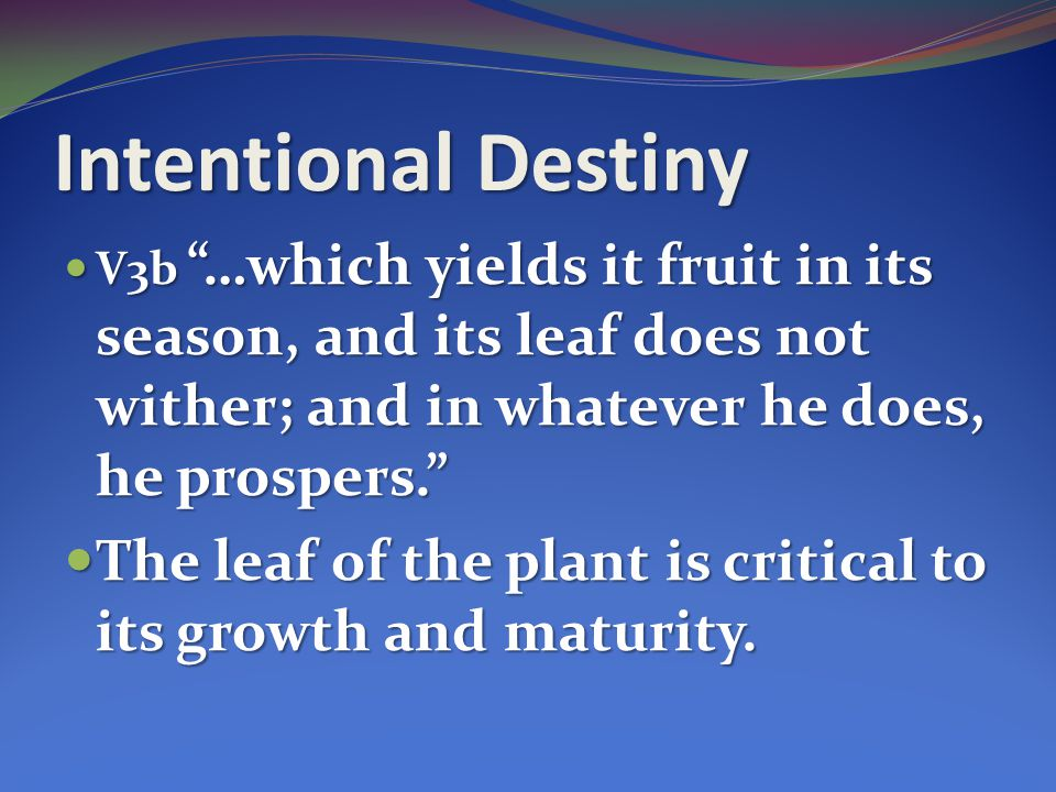 Intentional Destiny V3b …which yields it fruit in its season, and its leaf does not wither; and in whatever he does, he prospers.