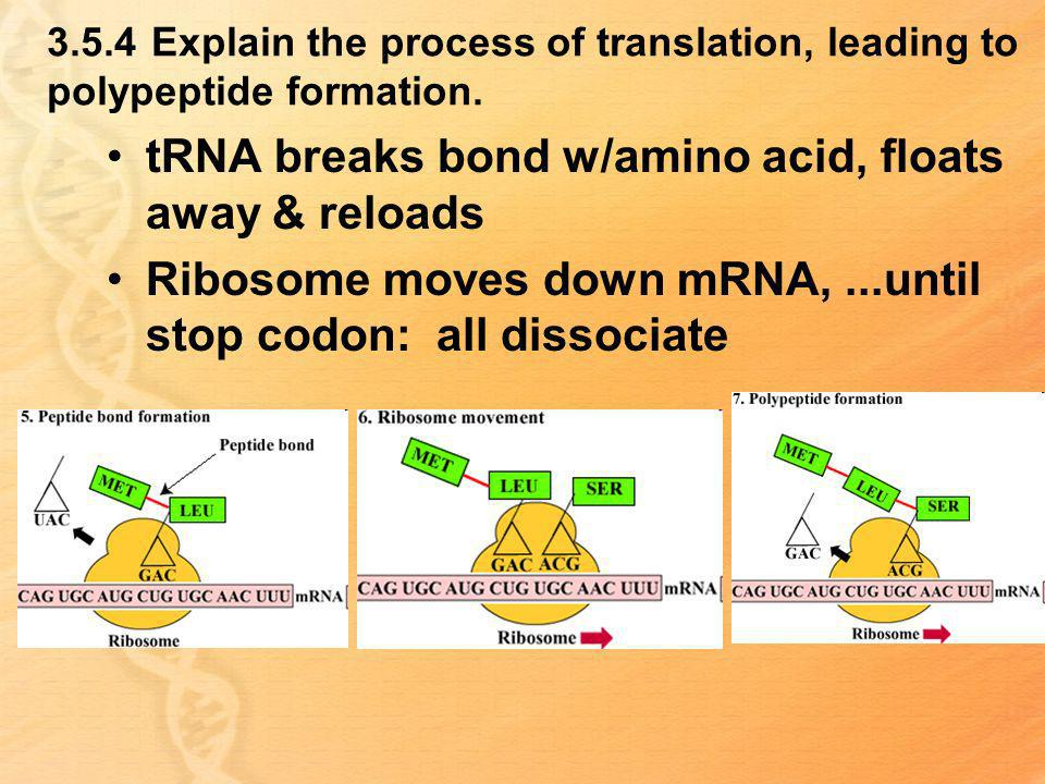 tRNA breaks bond w/amino acid, floats away & reloads