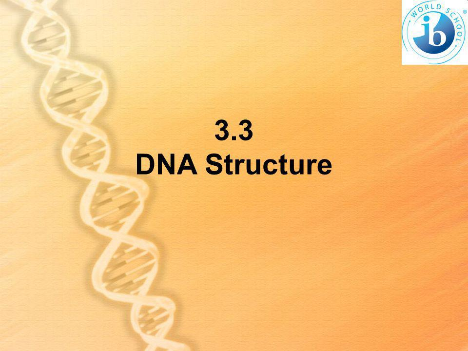 3.3 DNA Structure
