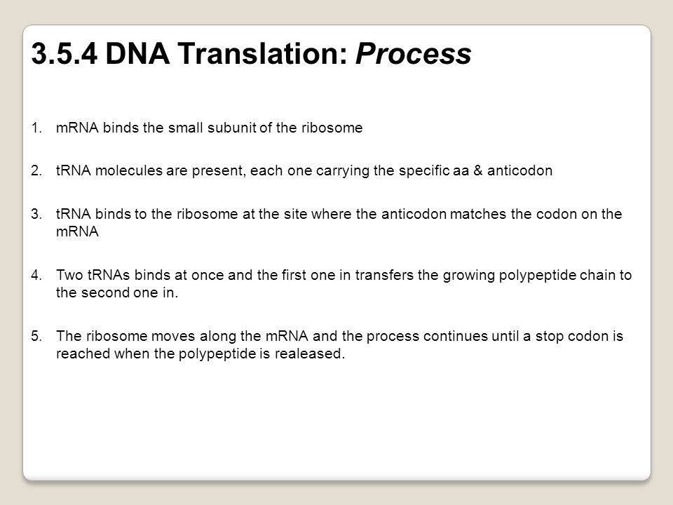 3.5.4 DNA Translation: Process
