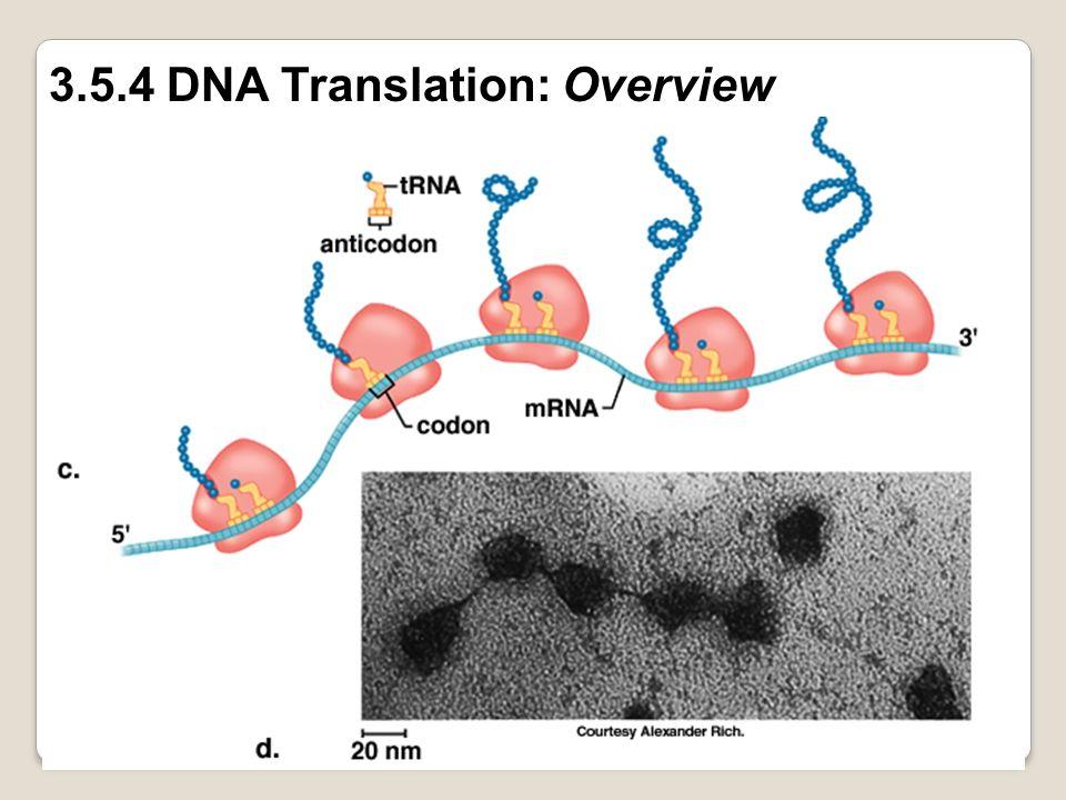 3.5.4 DNA Translation: Overview
