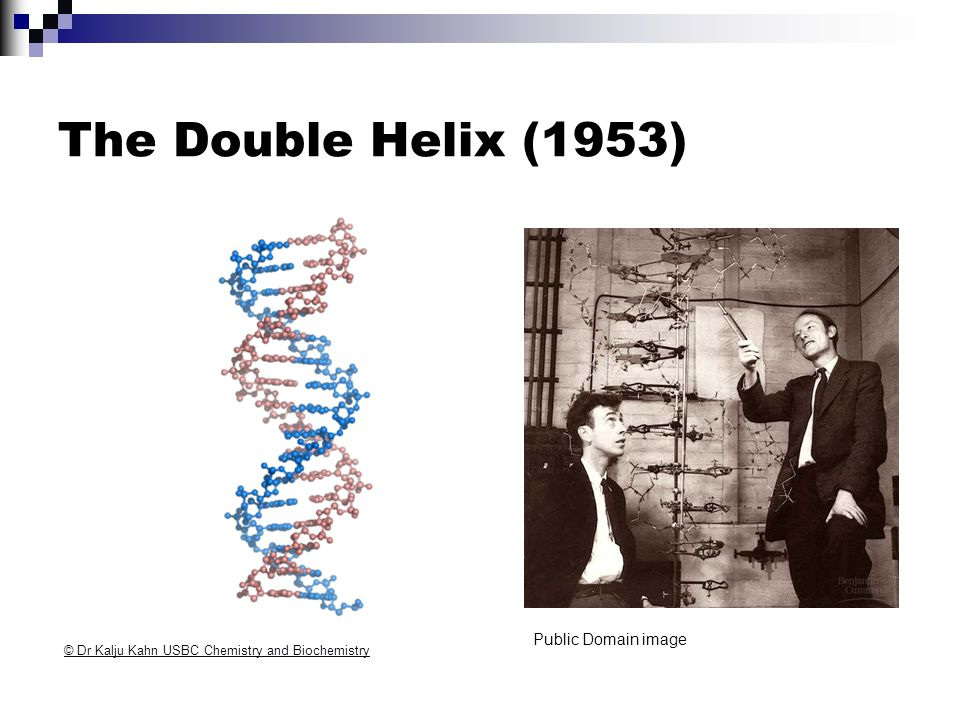 The Double Helix (1953) Public Domain image