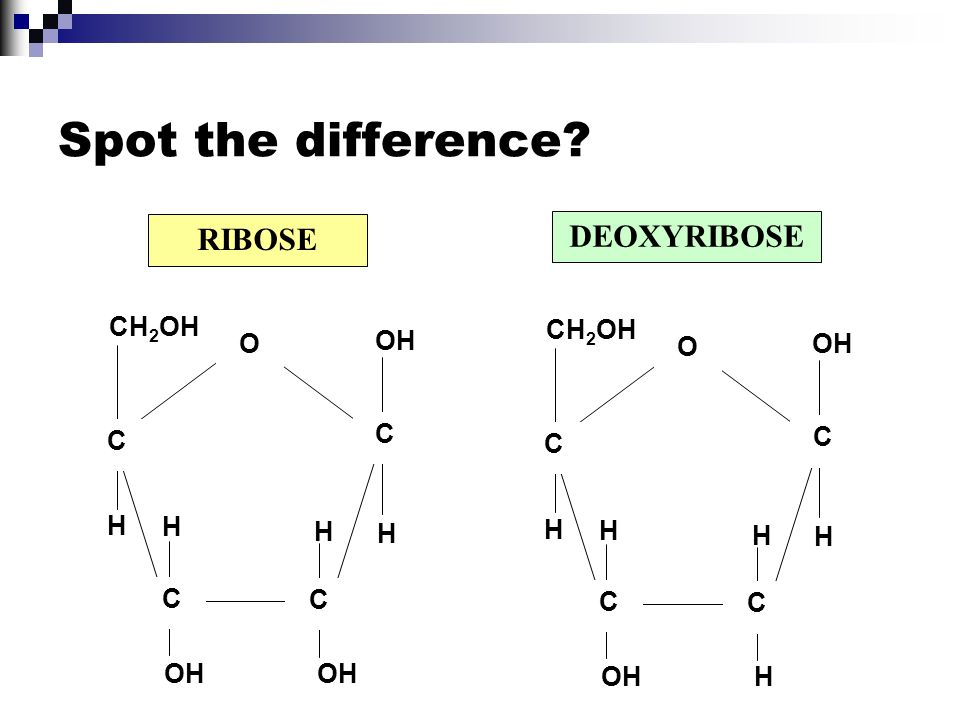 Spot the difference RIBOSE DEOXYRIBOSE CH2OH H OH C O