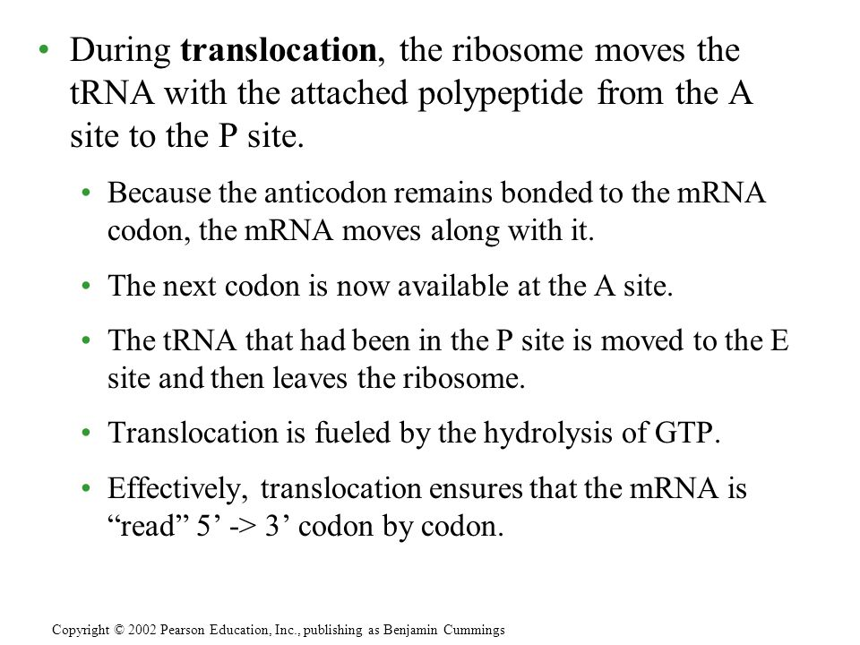 During translocation, the ribosome moves the tRNA with the attached polypeptide from the A site to the P site.