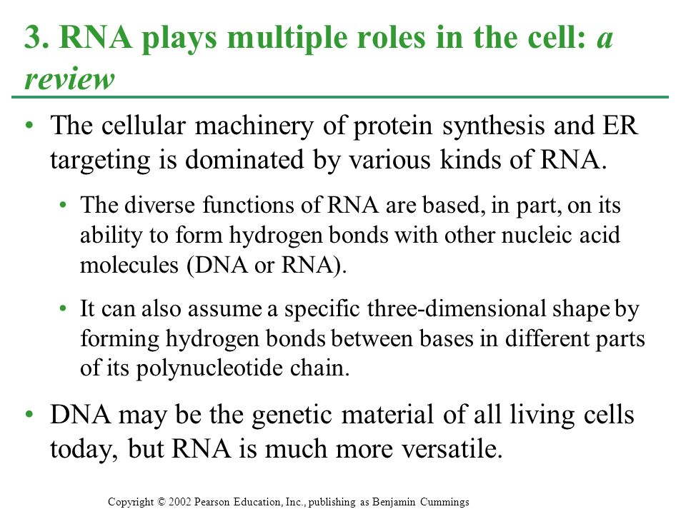 3. RNA plays multiple roles in the cell: a review