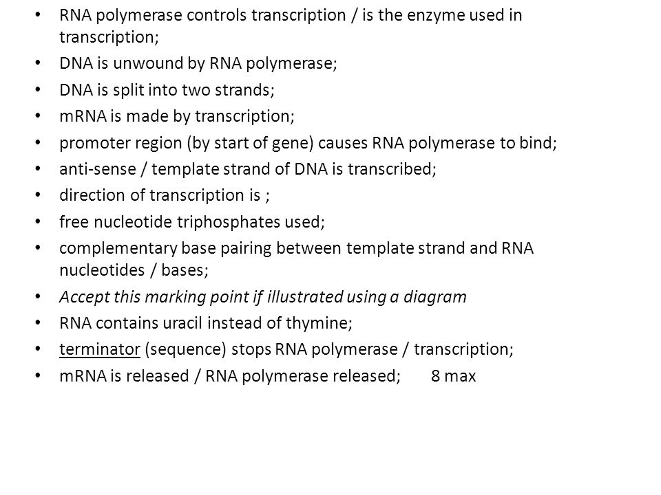 RNA polymerase controls transcription / is the enzyme used in transcription;